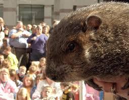 17 photos groundhogs celebrate groundhog 2017 402