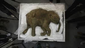 scientists working bring extinct animals