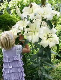 best 25 tree with white flowers ideas on white garden