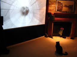 cat watching tv big screen projector cat watching tv big s u2026 flickr