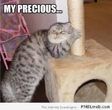 The Best Cat Memes - 25 my precious cat meme pmslweb