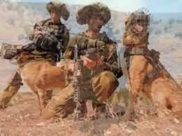 belgian shepherd special forces oketz idf special forces my idf unit youtube