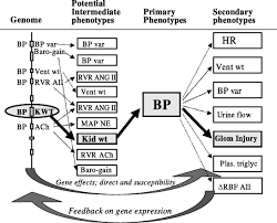 Map Mean Arterial Pressure Articles Physiological Genomics