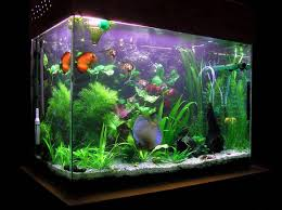 coolest fish tank accessories cool fish tanks for your home
