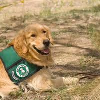 Comfort Golden See The K 9 Comfort Dogs Who Are Bringing Peace To The Victims Of