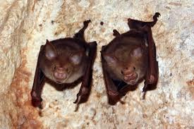 12 bats who refuse to be terrifying the dodo