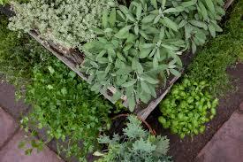 native plant nurseries melbourne home the garden of eden nursery