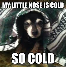 It S So Cold Meme - cold memes image memes at relatably com