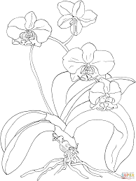 printable orchid coloring page free pdf download at http