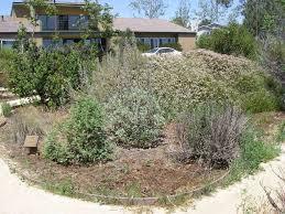native plant gardens 15th annual california native plant garden tour buena vista audubon
