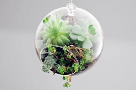 mini terrariums to decorate your indoor space by botany factory
