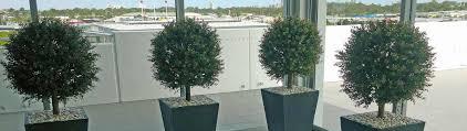 indoor outdoor artificial plants u0026 tress gold coast interior