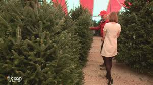 christmas tree shortage could mean austin tree lots sell out fast
