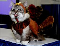cat turkey costume thanksgiving cats animals background