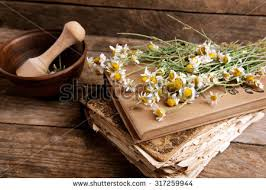 Drying Flowers In Books - homoeopathy stock images royalty free images u0026 vectors shutterstock