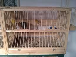 gabbie per costruire gabbia per uccelli tutta in legno curiosità web