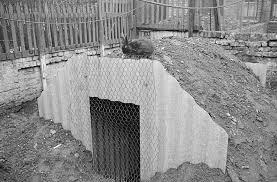 Backyard Bomb Shelter Backyard Bunkers Of The Blitz Pics Of Londoners Backyard Bomb