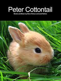 peter cottontail sheet music direct