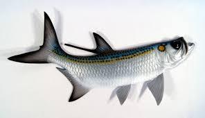 replica tarpon saltwater game ocean fish wall decor 28 inch wall