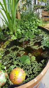 miniteich balkon 267 best miniteich images on garden ideas plants and