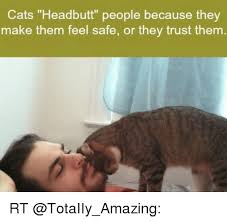 Them Feels Meme - cats headbutt people because they make them feel safe or they