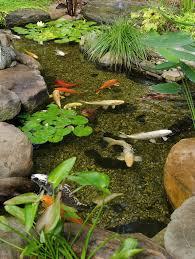 How To Make Backyard Pond by 279 Best Ponds Images On Pinterest Pond Ideas Backyard Ponds