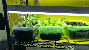 garden table community growing salad greens indoors