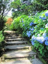 110 best hydrangeas garden images on pinterest flowers gardens