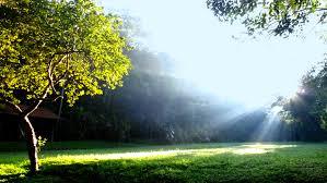 Divine Light Divine Light Google Search Mar 16 Explorer Innocent Blend