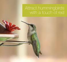 Hummingbird Flowers How To Attract Hummingbirds To Your Garden Flowers U0026 Plants