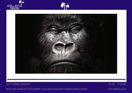 Gorilla Munch Meme - new gorilla munch meme sally s reflections on teaching learning you want gorilla munch meme jpg