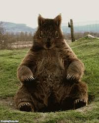 squirrel bear pictures freaking news