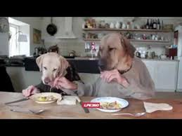 dogs at dinner table dogs at dinner table youtube