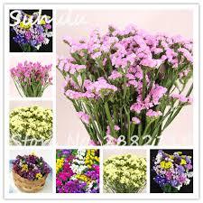 statice flowers online shop 30 pcs statice seeds limonium sinuatum beautiful