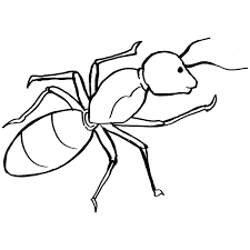 printable carpenter ant coloring sheet for toddlers