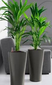 Decorative Indoor Planters Yuccas In Purple Pots Enhance Colours One Day Pinterest