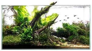 Aquascape Online Aquascape By Voloduson 90x45x45 Aquaria Inspiration Pinterest