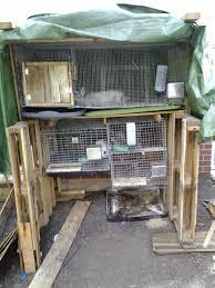 100 backyard meat rabbits rabbits u2013 page 2 u2013 willow