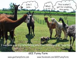 Why Is A Meme Called A Meme - gee funny farm gee funny farm memes