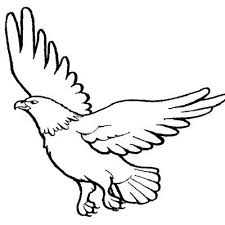 coloring pages for kids learn to color birds how to draw