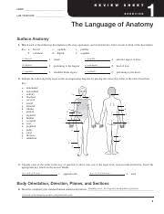 Planes And Anatomical Directions Worksheet Answers Worksheet Language Of Anatomy 1 Name Section The Language Of