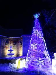 phipps conservatory christmas lights christmas trees and lights picture of phipps conservatory and