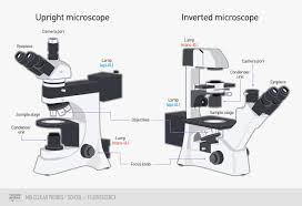 Parts Of A Compound Light Microscope Epifluorescence Microscope Basics Thermo Fisher Scientific