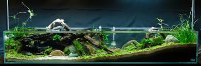 Aquascape Lighting Aquascaping A Whole New Dimension The Green Machine