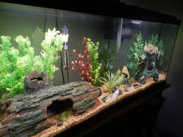 how to change the water in your freshwater aquarium the easy way