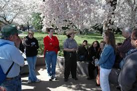 Cherry Blossom Tree Facts by Ranger Programs Cherry Blossom Festival U S National Park Service