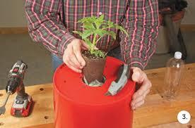 Upside Down Tomato Planter by Plant Tomatoes Upside Down In A 5 Gallon Bucket Quarto Homes