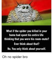 Spider Bro Meme - what if the spider you killed in your home had spent his entire life