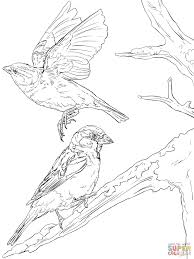 english sparrows coloring page free printable coloring pages