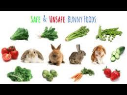 rabbit food safe unsafe rabbit foods